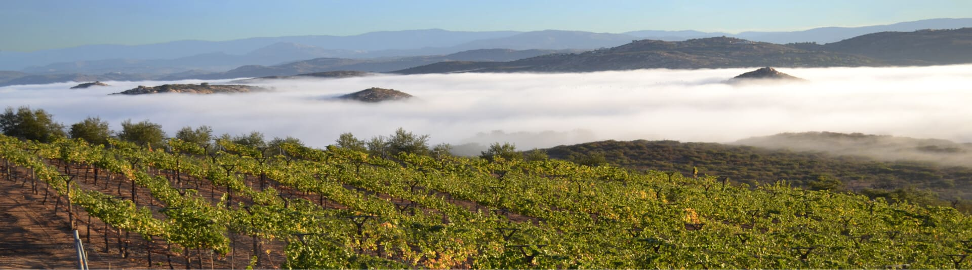 Word is Starting to Spread About San Diego Wines!